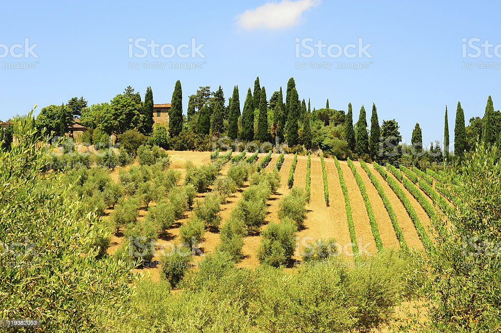 Hill Of Tuscany royalty-free stock photo
