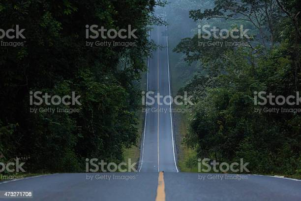 a narrow hill road inside the forest