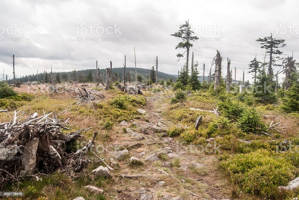 hill summit with meadow, isolated trees and hiking trail stock photo