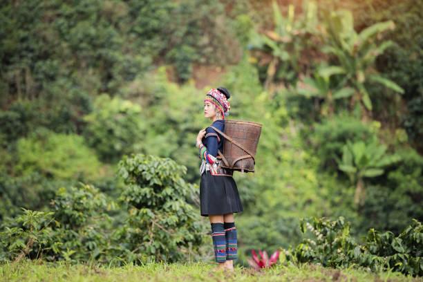 hill tribe coffee plantation - coffee farmer foto e immagini stock