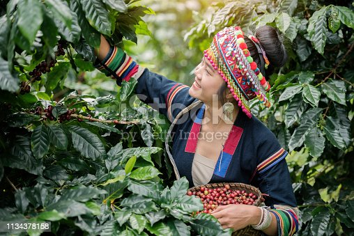 1135319558 istock photo Hill Tribe Coffee Plantation 1134378158
