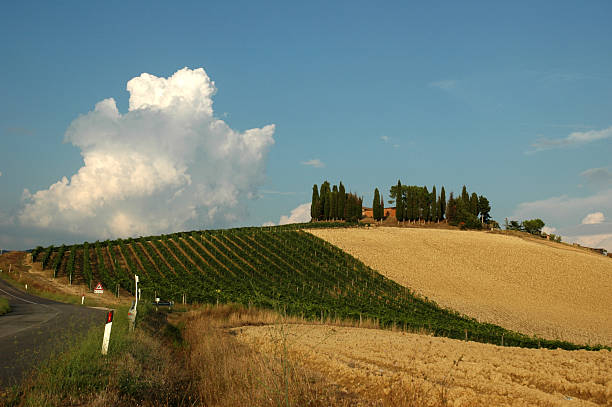 Hill, vineyard and groomed fields in Tuscany, Italy stock photo