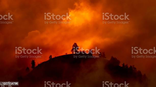 Photo of Hill with trees about to burn in red, orange wildfire