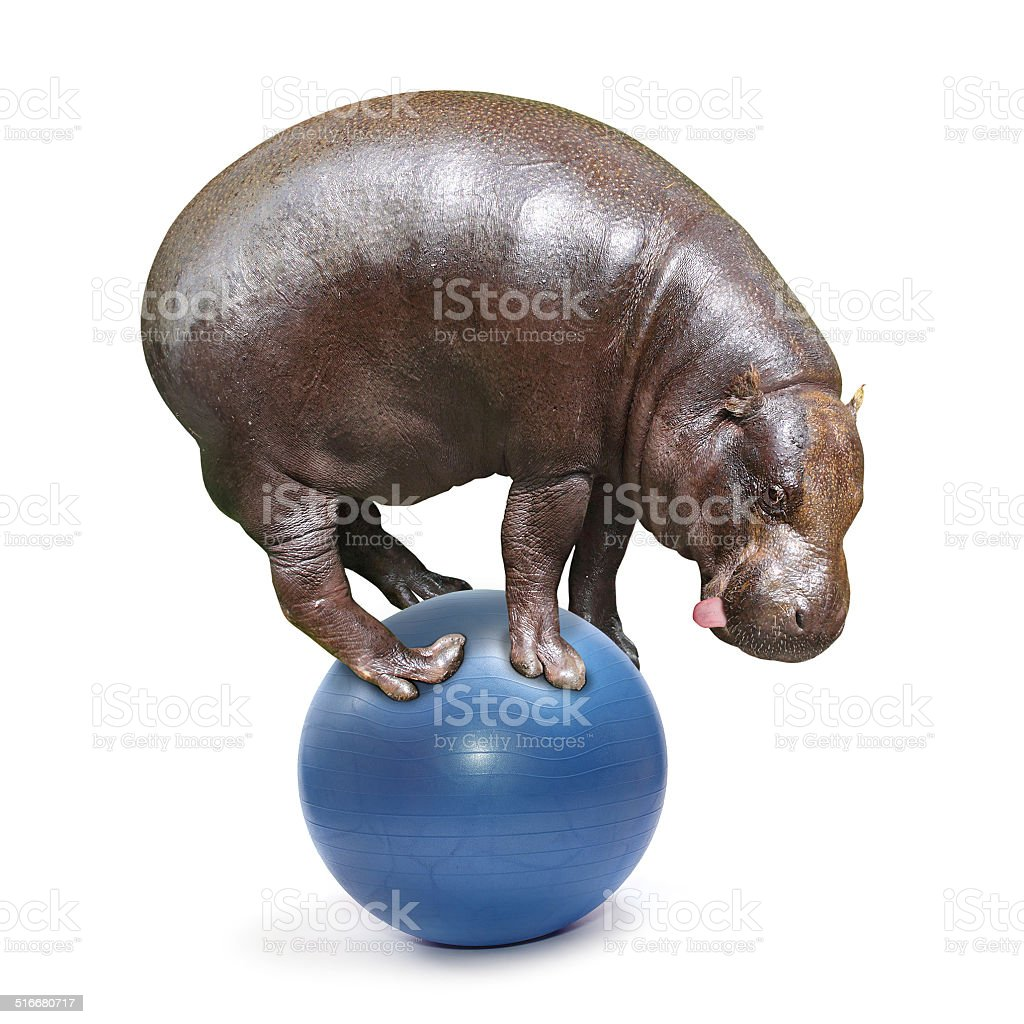 Hillarious hippo. stock photo