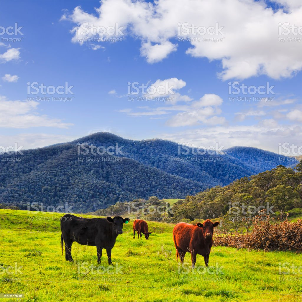 BM Hills 3 Bulls Sky stock photo
