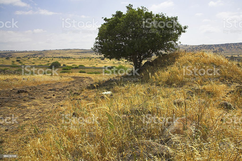 Hills and fields royalty-free stock photo