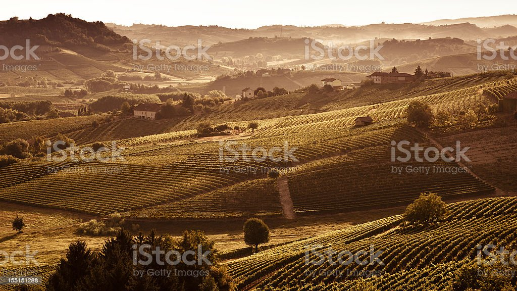 Hills at sunset with vineyards and trees stock photo