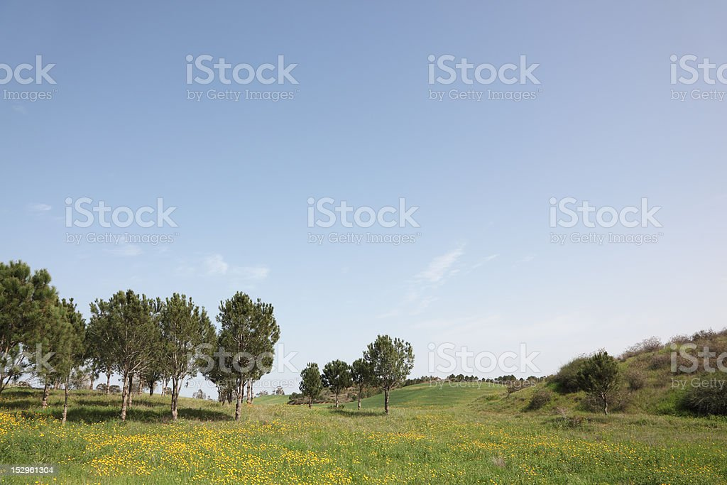 Hills, green grass and  trees royalty-free stock photo