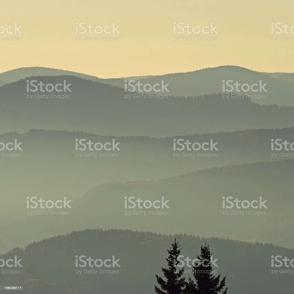 Hills in golden light sunset with two tree silhouettes royalty-free stock photo
