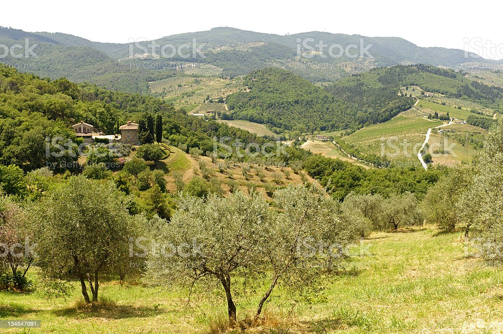 Hills in Tuscany near Artimino royalty-free stock photo