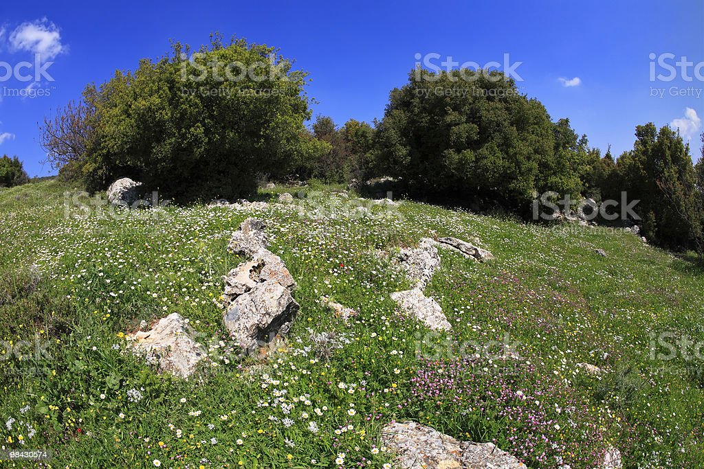 Hills of Galilee royalty-free stock photo