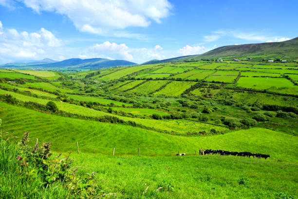 Hills of green fields in the countryside of Ireland. Dingle peninsula, County Kerry. stock photo