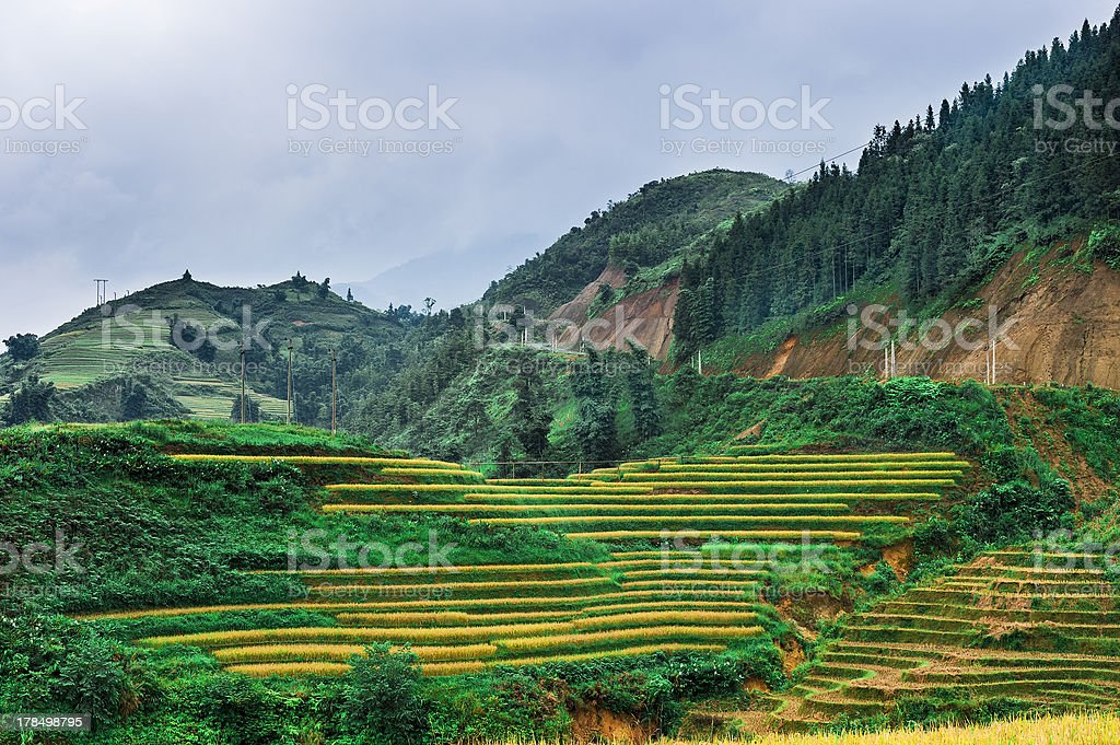 Hills of rice terraced fields and mountains in clouds royalty-free stock photo