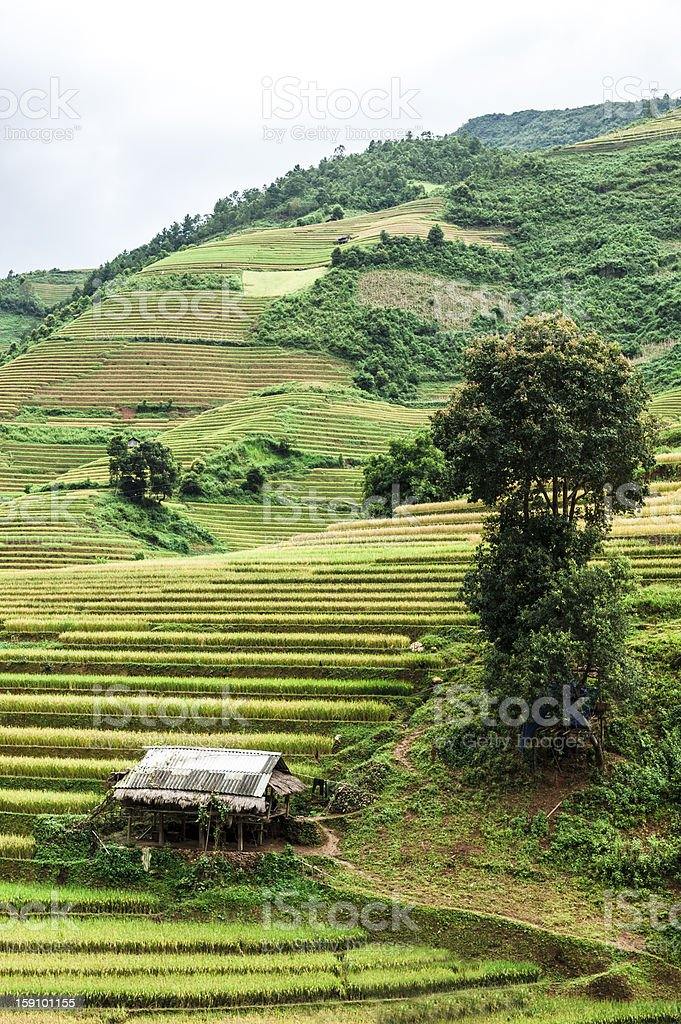 Hills of rice terraces with mountains and clouds at background royalty-free stock photo