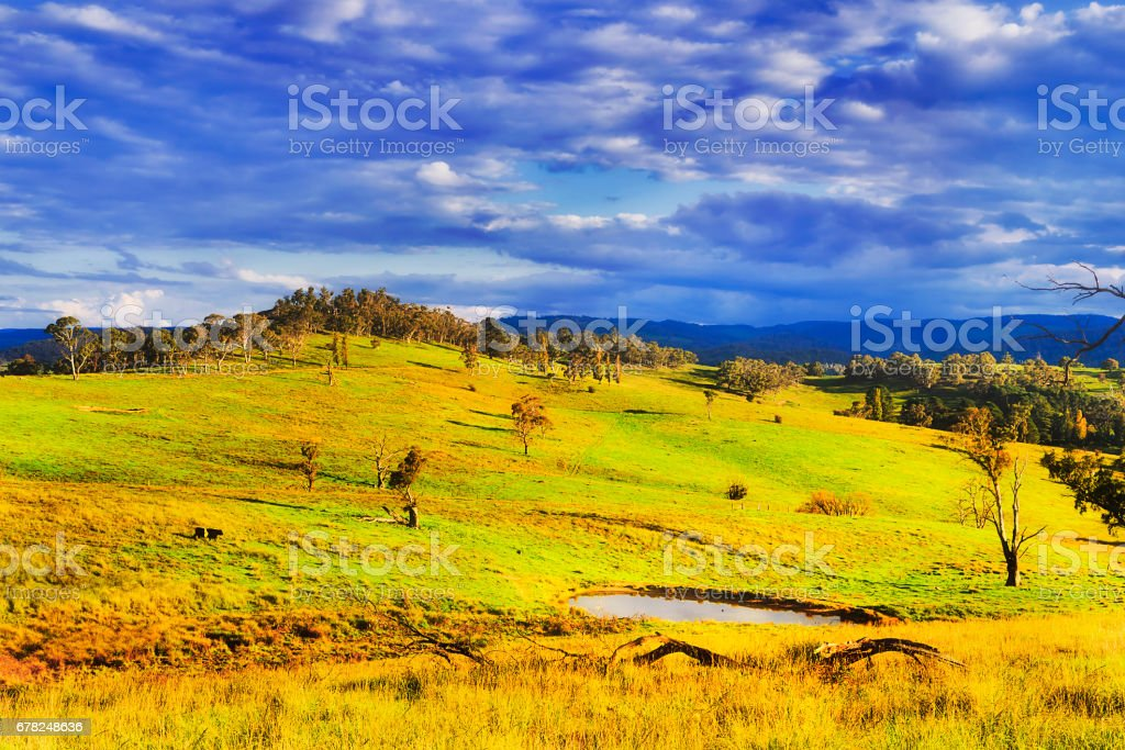 BM Hills Water Pit Grazing stock photo