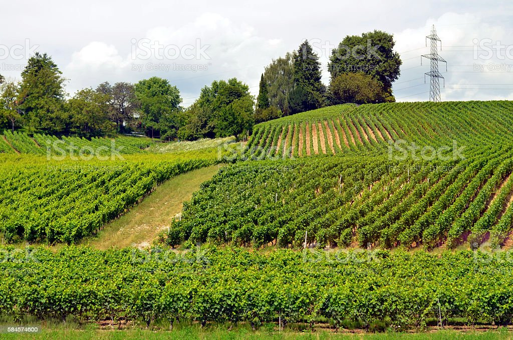 hills with green vineyard in rhone alpes, france - Photo