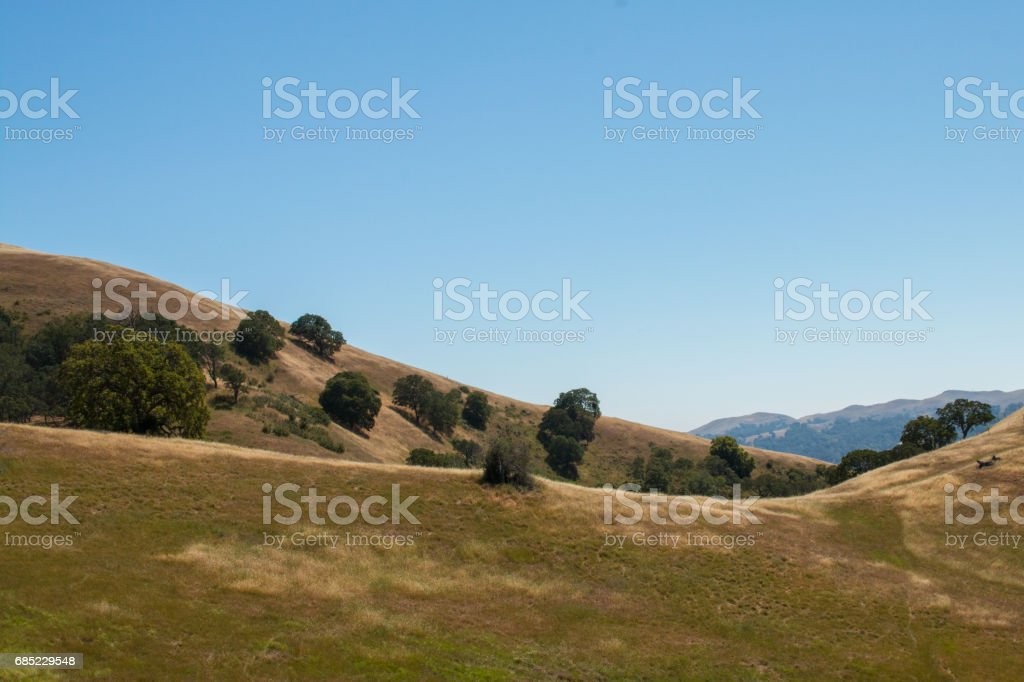 Hills with oak trees and grassy meadow stock photo