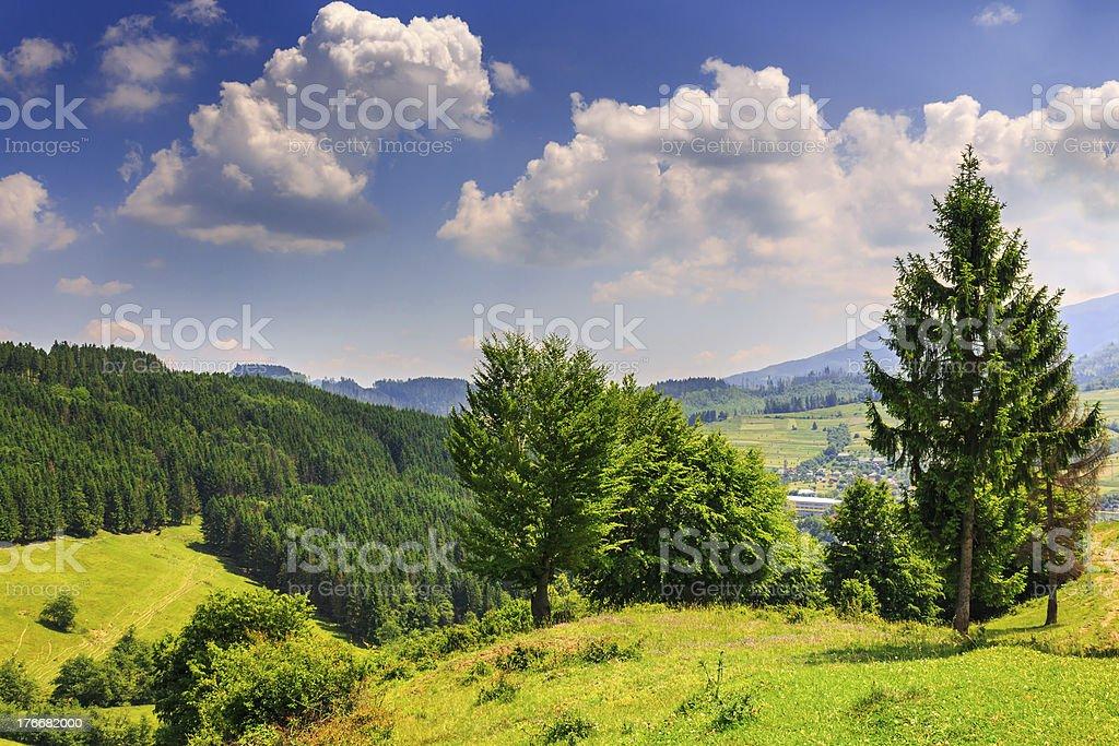 hills con palmeras y de los bosques foto de stock libre de derechos