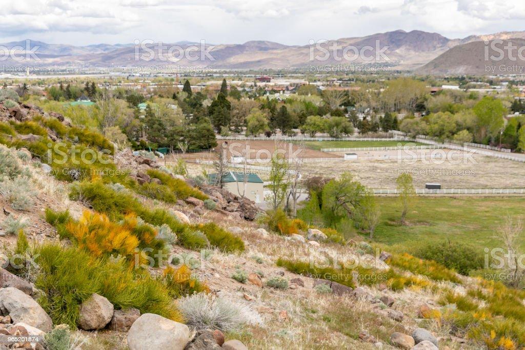 Hillside in Reno, Nevada blooming with Mormon Tea plant. zbiór zdjęć royalty-free