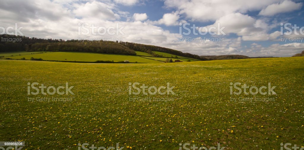 A hillside in the Chilterns in summer stock photo