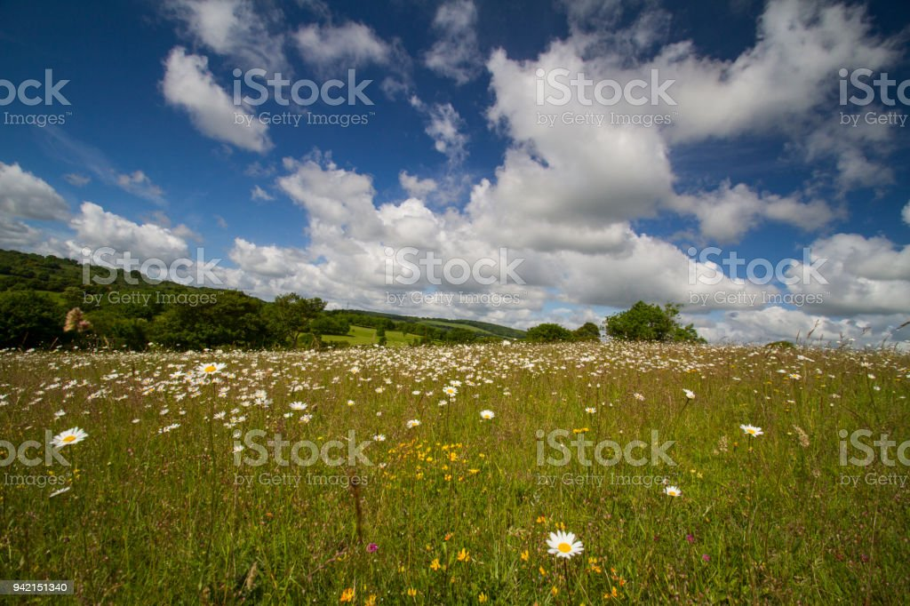 A hillside meadow in the Chilterns in Summer stock photo