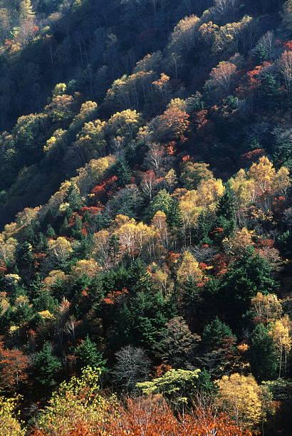 までの秋の丘 ストックフォト