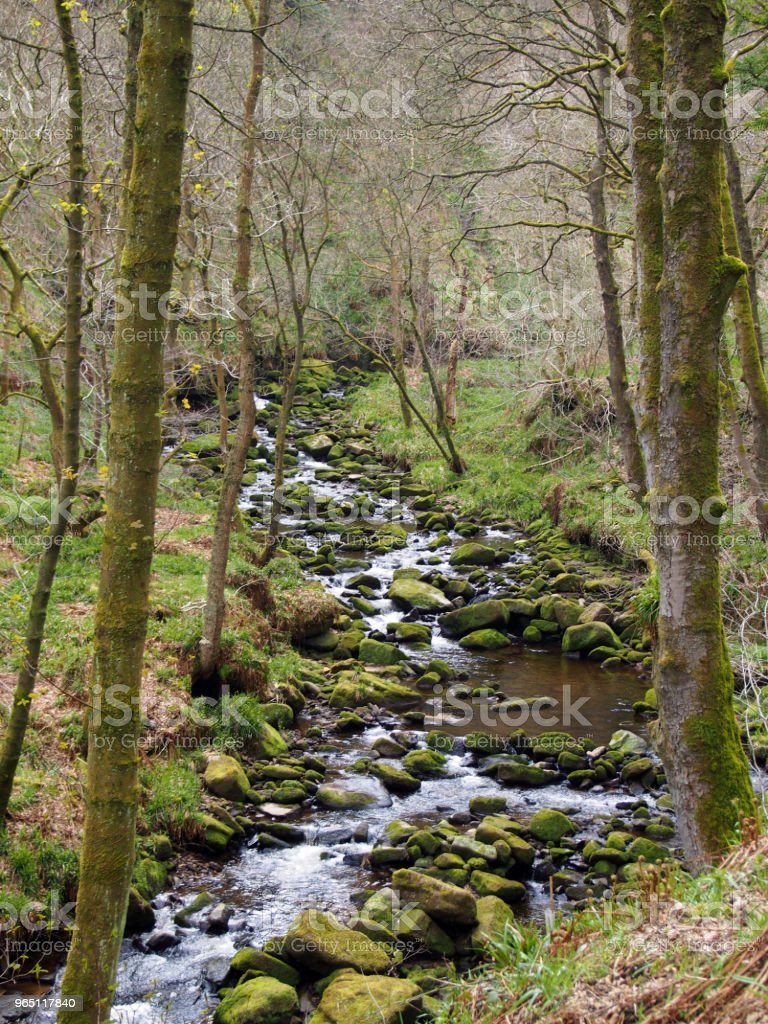 hillside stream running through mossy rocks and boulders with overhanging forest trees in dense woodland zbiór zdjęć royalty-free