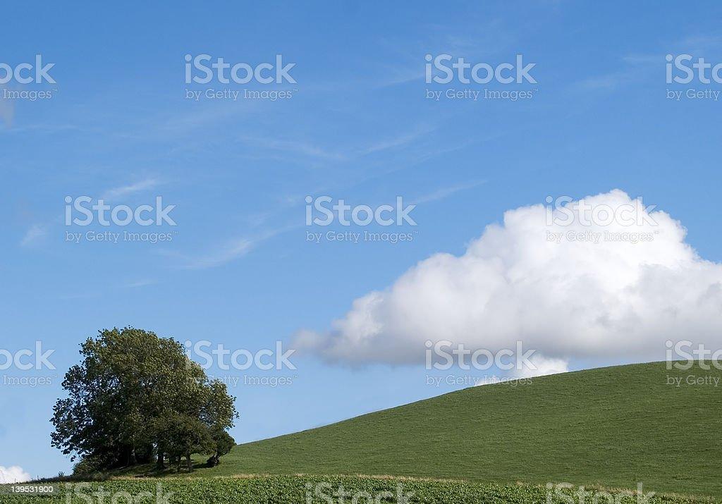 Hillside Tree royalty-free stock photo