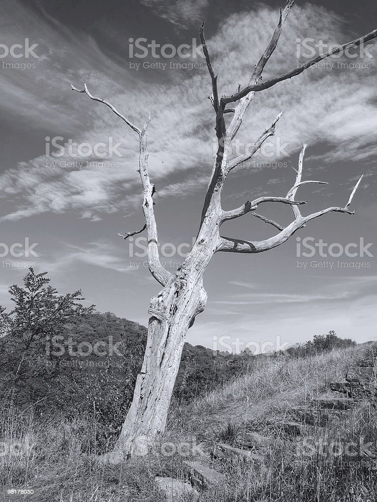 Hillside Tree royalty-free stock photo