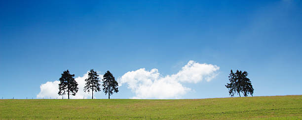 Hilltop trees stock photo