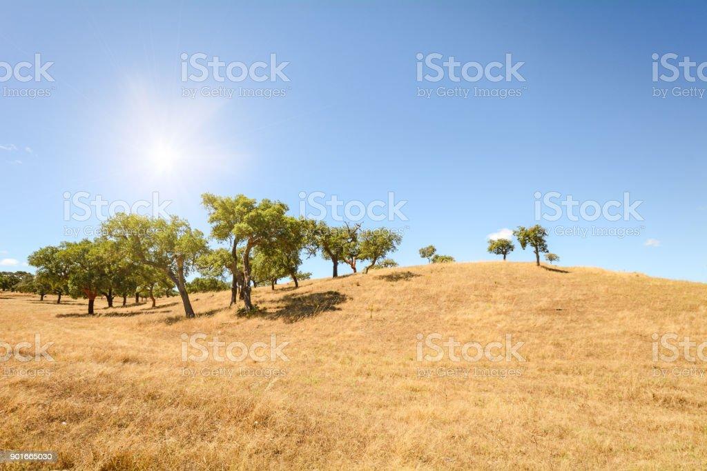 Alentejo-Hügellandschaft mit Korkeichen und gelben Felder im Spätsommer in der Nähe von Beja, Portugal Europa – Foto