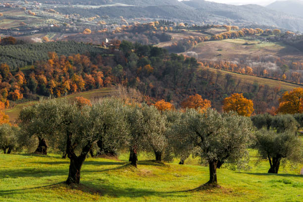 Hilly countryside in Umbria Scorci tipici della campagna in Umbria nei pressi di Amelia umbria stock pictures, royalty-free photos & images