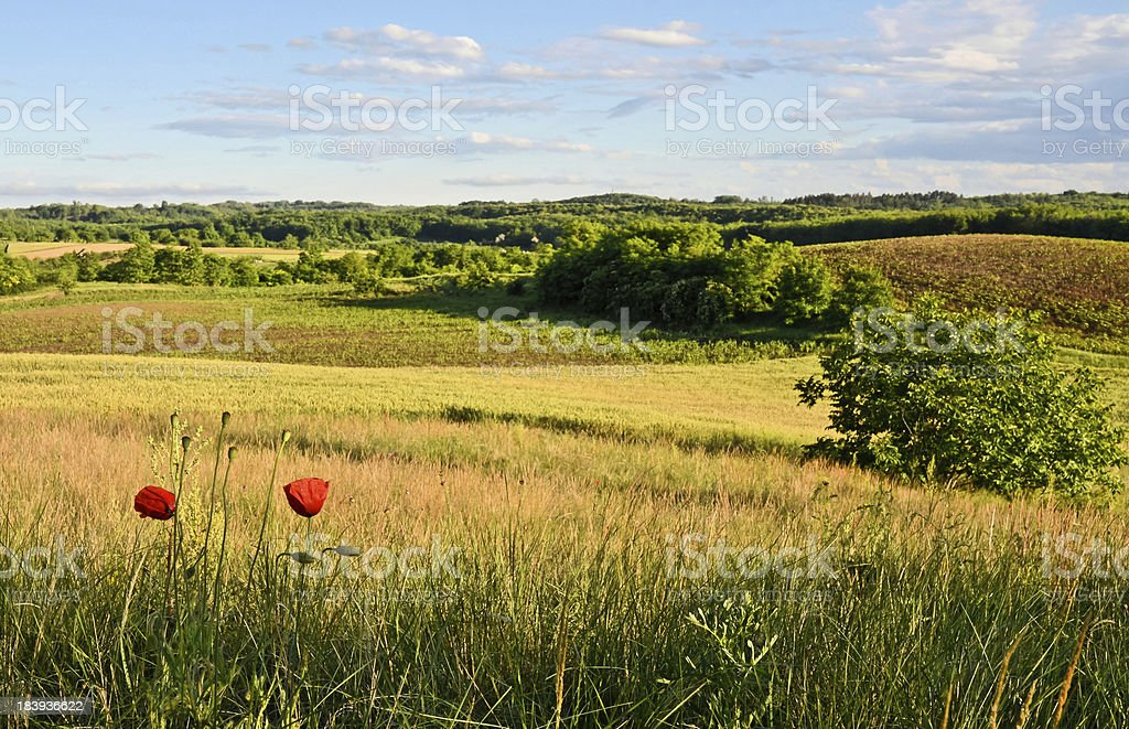 Hilly Fields royalty-free stock photo