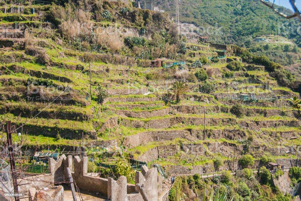 Colinas De Terrazas Para La Agricultura Foto De Stock Y Más