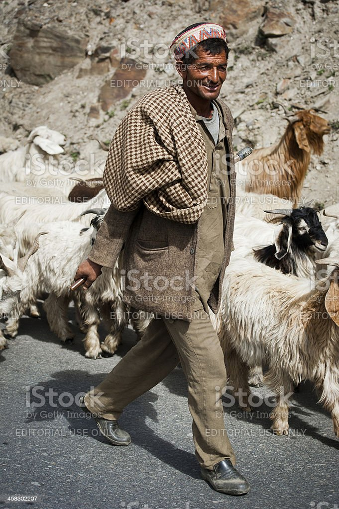Himalayan shepherd from Lahoul Valley leads his flock royalty-free stock photo