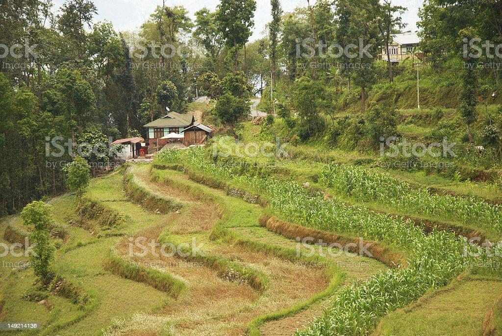 Himalayan terrace stock photo