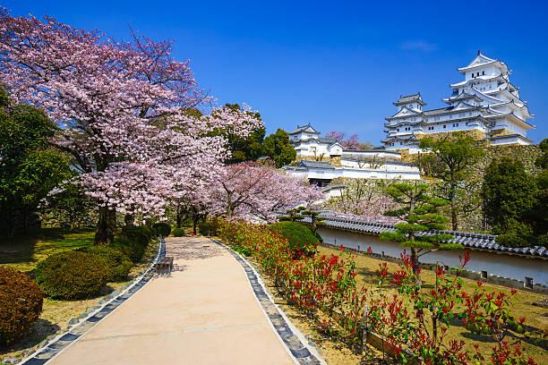 Burg Himeji in Kirsche Blumen blühen Saison, Hyogo, Japan – Foto