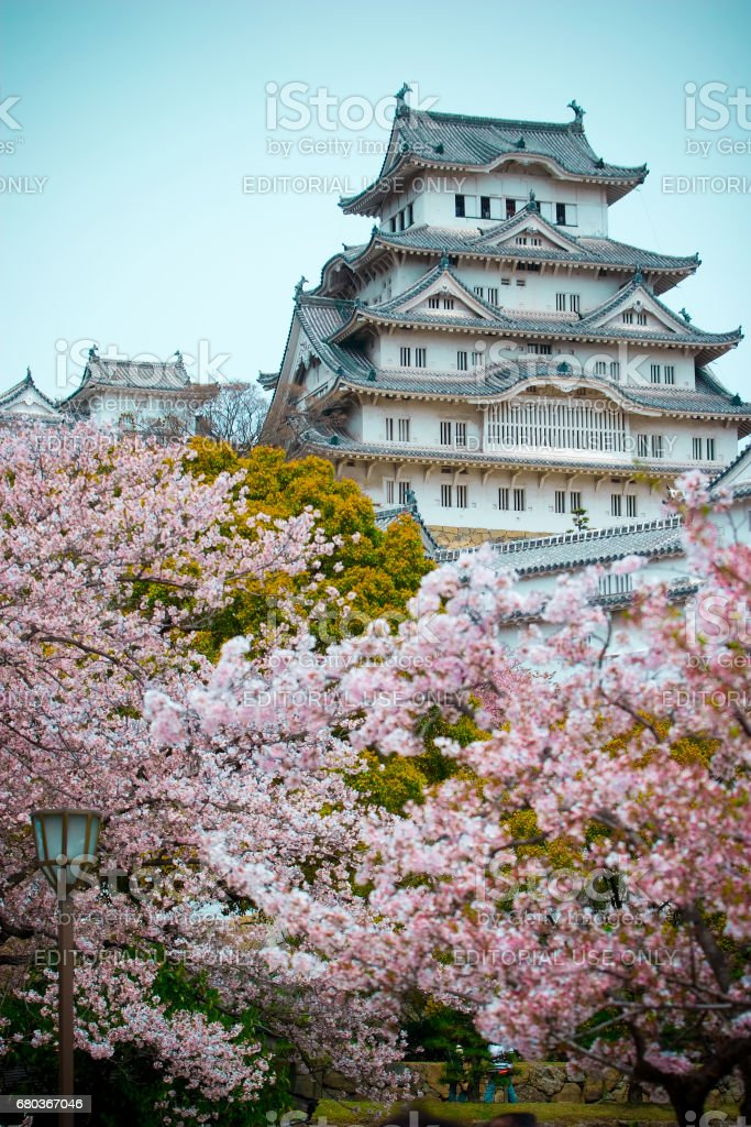 Himeji Castle with the cherry blossoms (sakura) stock photo