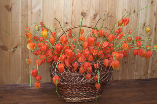 Сhinese lanterns in a basket stock photo