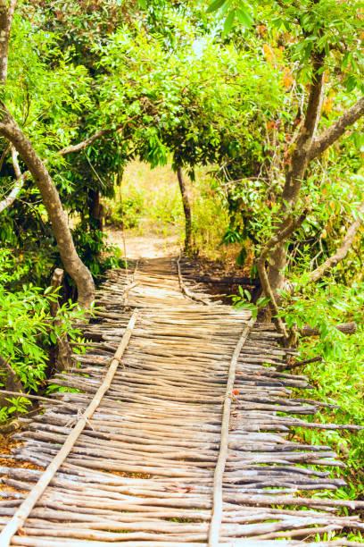 A hinged bridge of thin trees stock photo