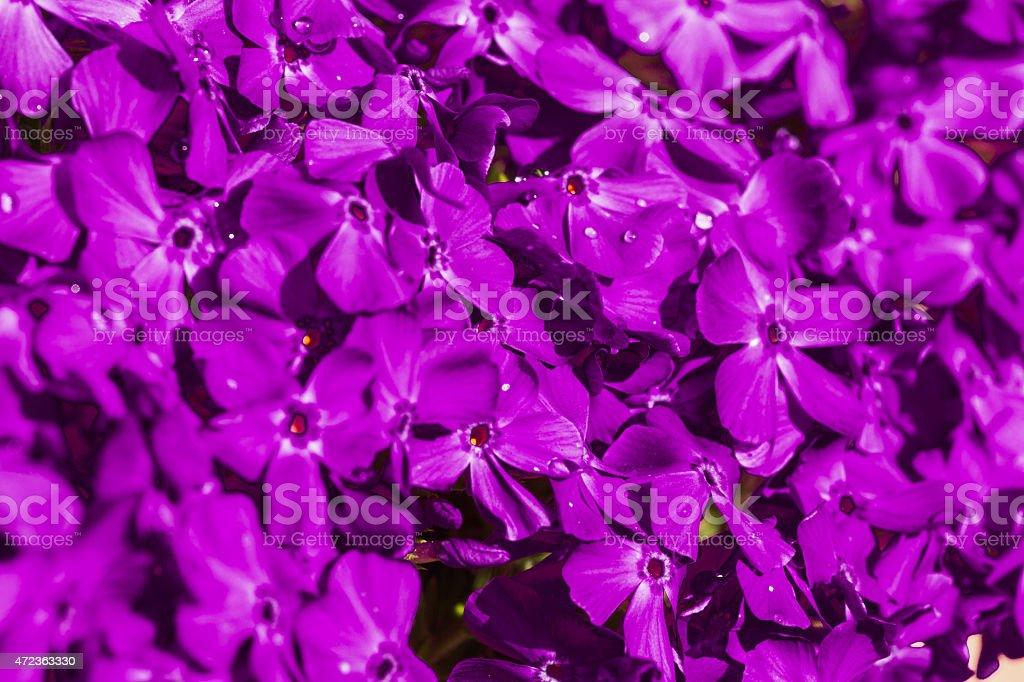 Hintergrund Blumen stock photo