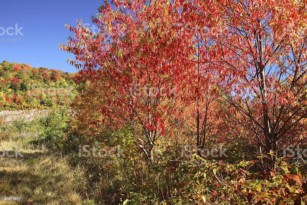Hints of Autumn royalty-free stock photo