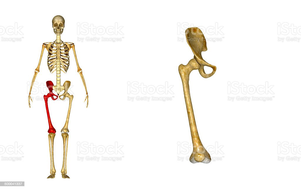 Hip joint royalty-free stock photo