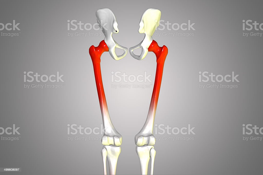 hip with legs royalty-free stock photo