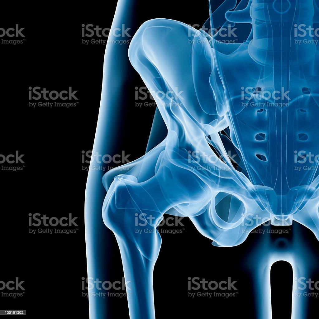 Hip x-ray stock photo