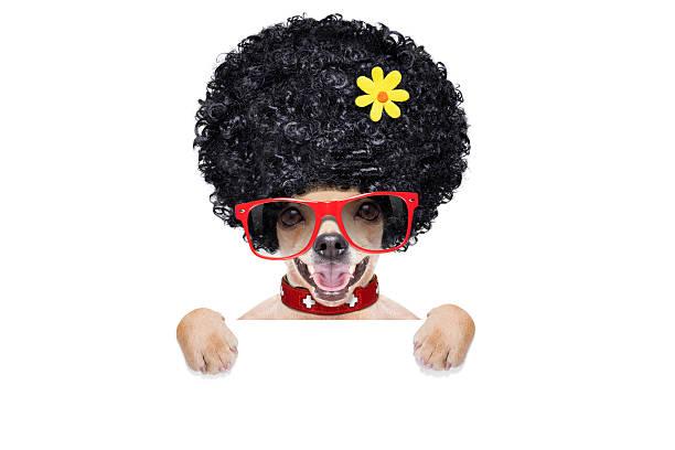 hippie-hund - coole liebessprüche stock-fotos und bilder