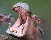- cartoon illustration of africa animals