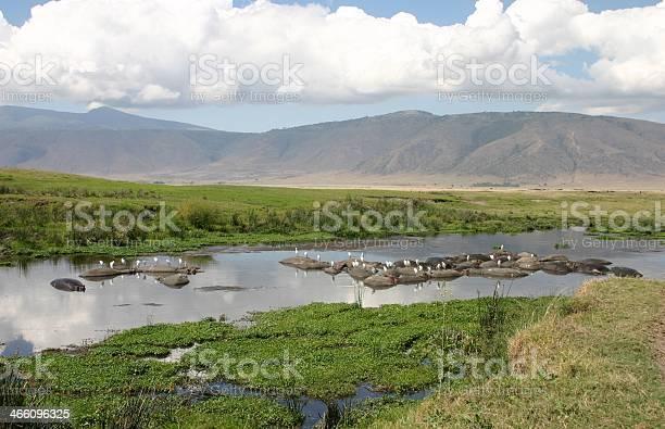 Photo of Hippo Pool with Swimming Hippopotamus, Ngorongoro Crater, Serengeti, Tanzania, Africa