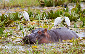 A herd of hippos caught napping. Taken in South Africa