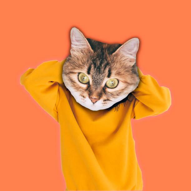 gato hipster en ropa de moda suéter en coral color fondo - cat vaporwave fotografías e imágenes de stock